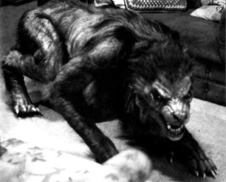 Quel type de Loups-Garous préférez-vous ? Americ10