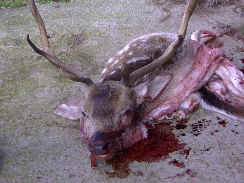 J'ai tué une choucroute Pict0011