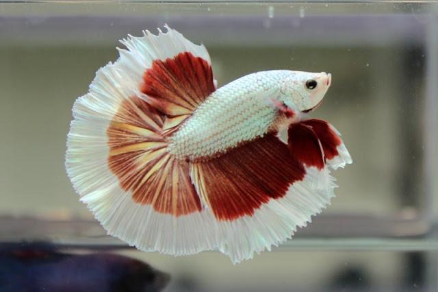 Mon aquarium Img_4211