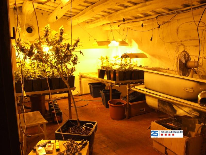 Els mossos localitzen un laboratori de cultiu i producció de marihuana en una casa ocupada al Masnou Labora10
