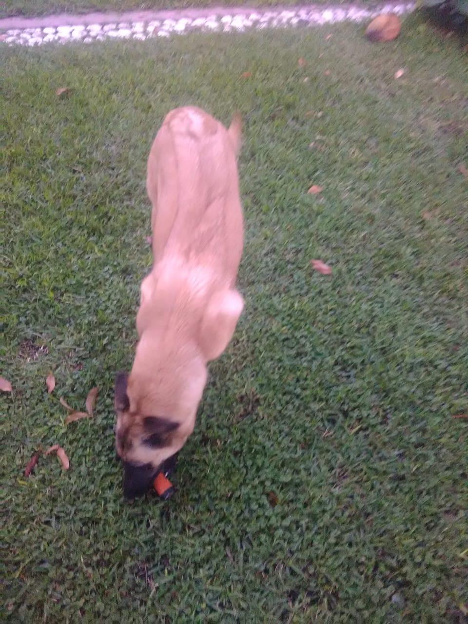 Mi mascota se comió una macuquina!!! Img-2014