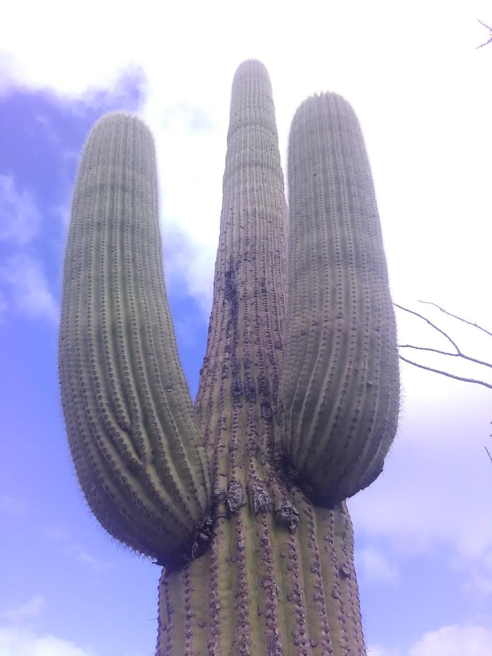Busqueda de pepitas de oro en Sonora 2019 Saguar10