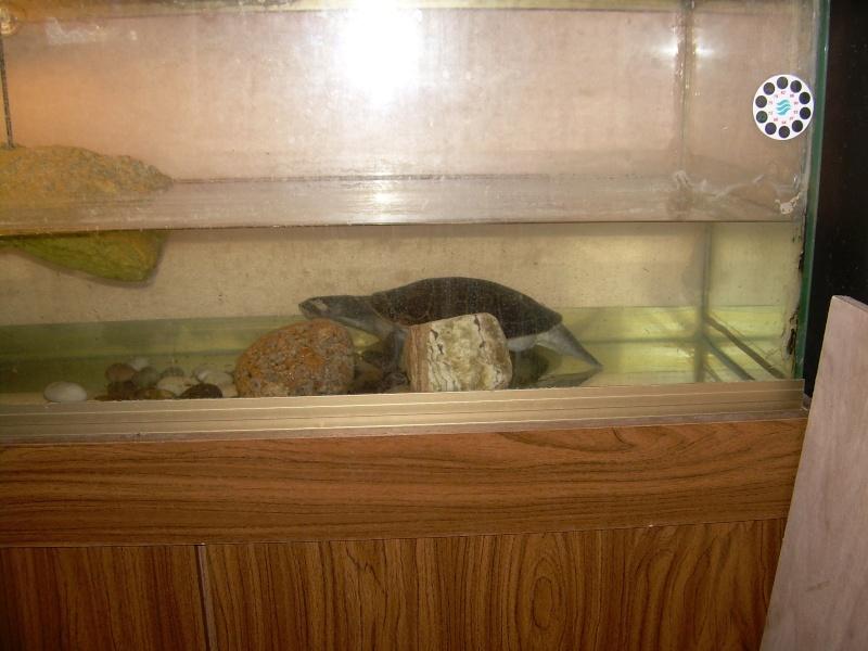 bassin d'intérieur pour tortues - Page 2 Dscn1834