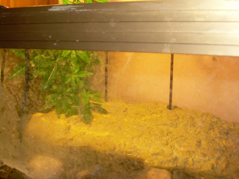 bassin d'intérieur pour tortues - Page 5 Dscn1859