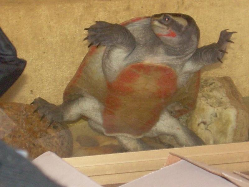 bassin d'intérieur pour tortues - Page 5 Dscn1862