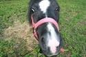 Lili et Summer - ponettes shetlands - adoptées en avril 2009 par agnes P - Page 8 Img_1411