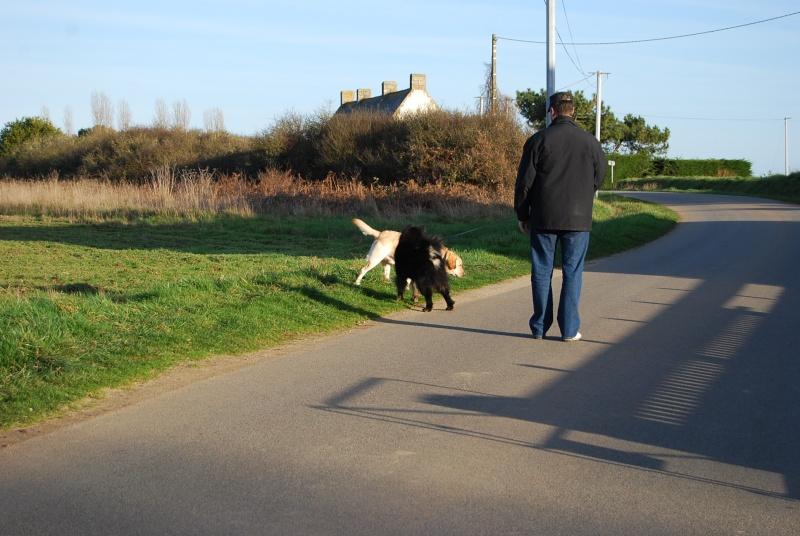 Testez vos connaissances sur les comportements et attitudes des chiens - Page 5 Dsc_0018