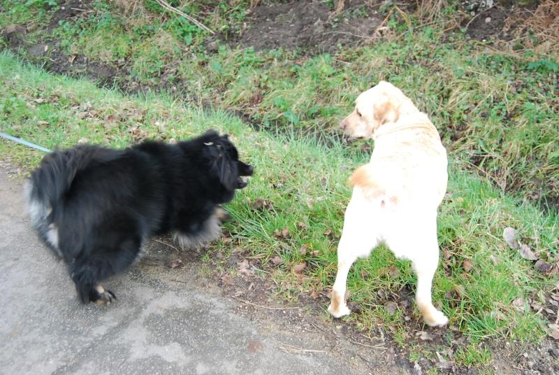 Testez vos connaissances sur les comportements et attitudes des chiens - Page 5 Dsc_0020