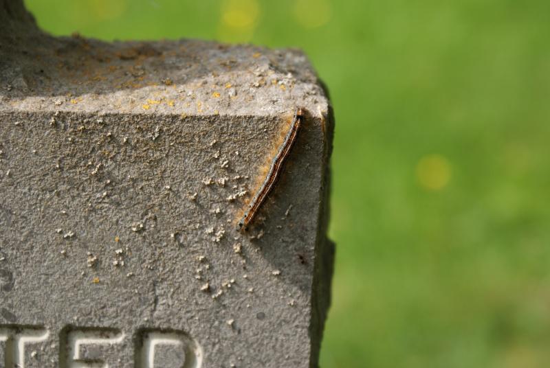 Cimetière Allemande de Sandweiler ( Luxembourg ) Luxemb18