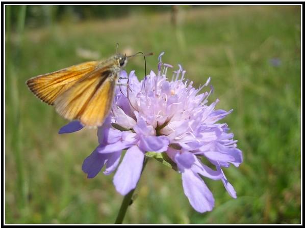 Petit papillon Cvhjvb10