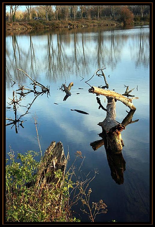 souche au bord du lac hier aprés midi Tron210