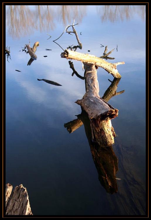 souche au bord du lac hier aprés midi Tronc110