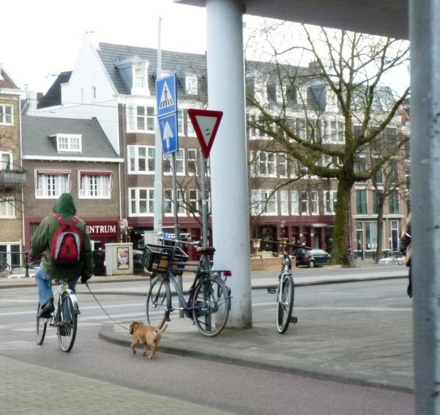 Amsterdam, ville bizarre Chien10