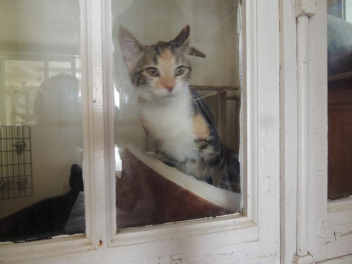 Arbre à chat...encore 1 8_sept11