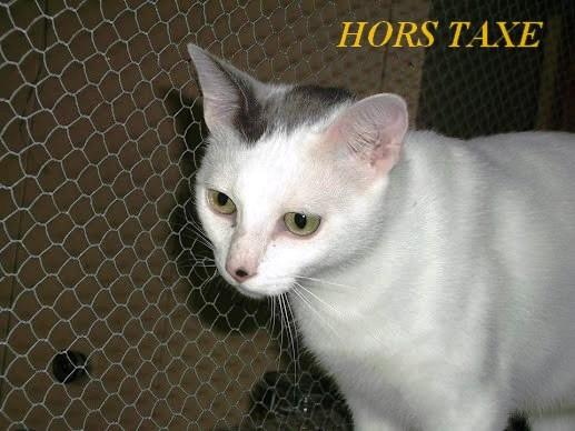 HORS TAXE - blanc - né 10/2012 Hors_t10