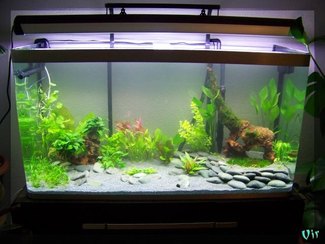 matevir 120l - Aquarium de Matevir: Osaka 320 (nouvelles photos) Aqua_o10
