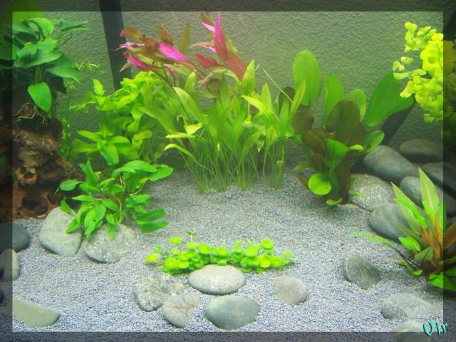 matevir 120l - Aquarium de Matevir: Osaka 320 (nouvelles photos) Aqua_o11