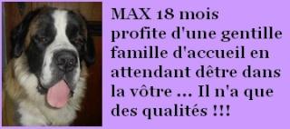 Max 18 mois en FA chez Rachou Max_1811