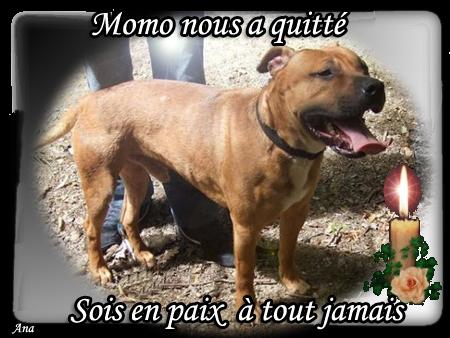 HOMMAGE POUR MOMO que j'ai garder gracieusement pendant 2 mois 1/2 par amour Momoho10