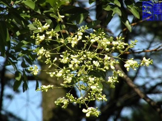 Những loại cây mang đến tài vận dồi dào 12790110