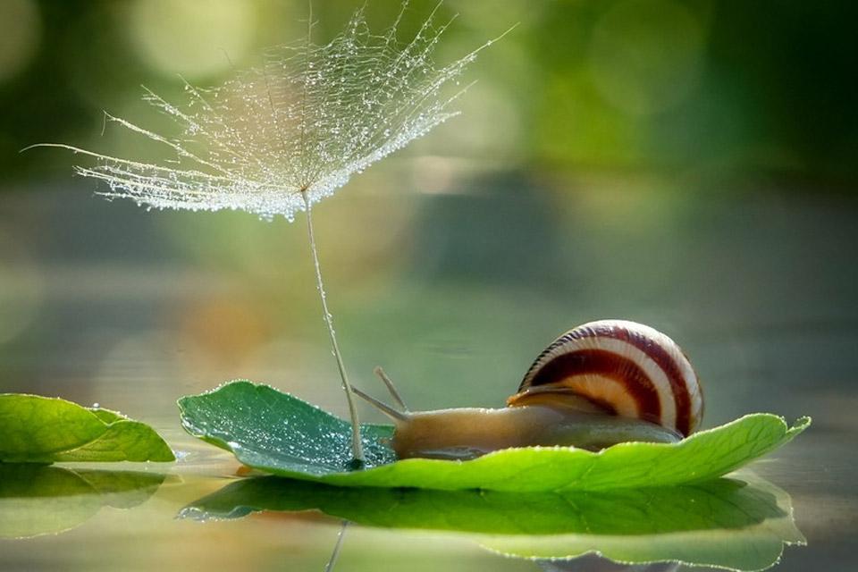 Thế giới bé tí xíu của những chú ốc sên  96f13910