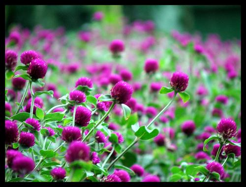 Những loài hoa thích hợp với cung hoàng đạo Bachnh10