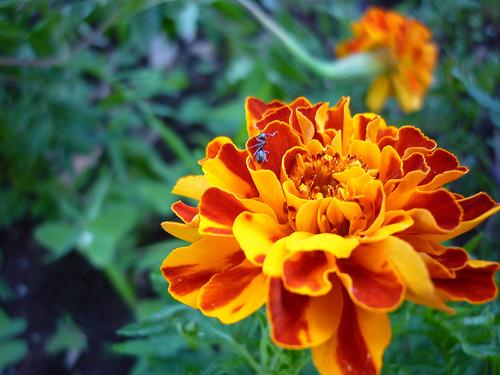 Những loài hoa thích hợp với cung hoàng đạo Cucvan10