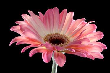 Những loài hoa thích hợp với cung hoàng đạo Dongti10