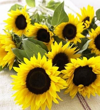 Những loài hoa thích hợp với cung hoàng đạo Huongd10