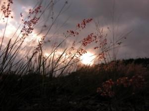Thơ Hồ Xuân Hương – bức tranh của một tâm hồn yêu cuộc sống mãnh liệt  Mong-m10