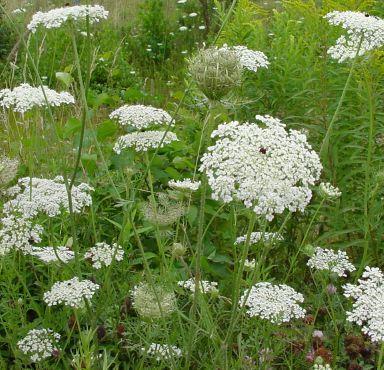 Những loài hoa thích hợp với cung hoàng đạo Queena10