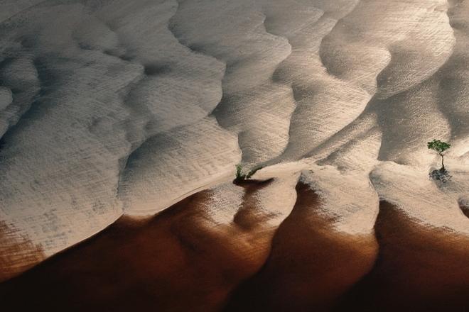 Nhiếp ảnh gia Yann Arthus-Bertrand Yannar32