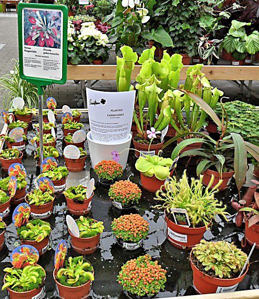 Garden Center ANDREFLEURS à Assens (VD) Jardin11