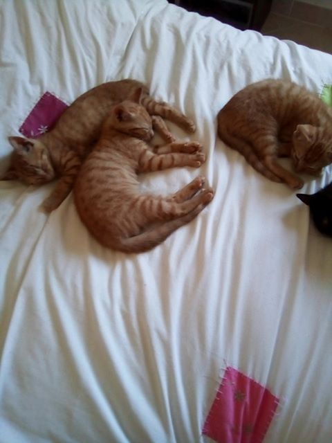 3 Chatons roux 67143610