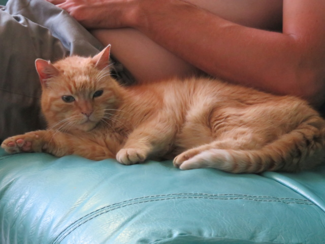 Vive d'Or, mamie chat de 14 ans Img_2724