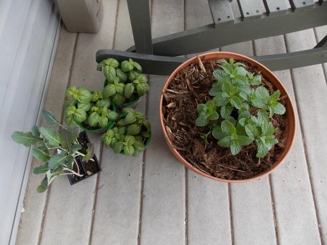 Jenn's Gardening thread- 2013 Dscn2010