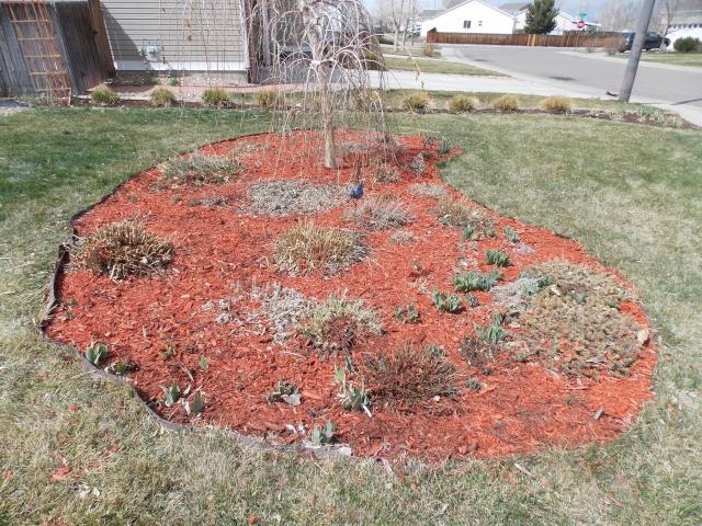 Jenn's Gardening thread- 2013 Dscn2011