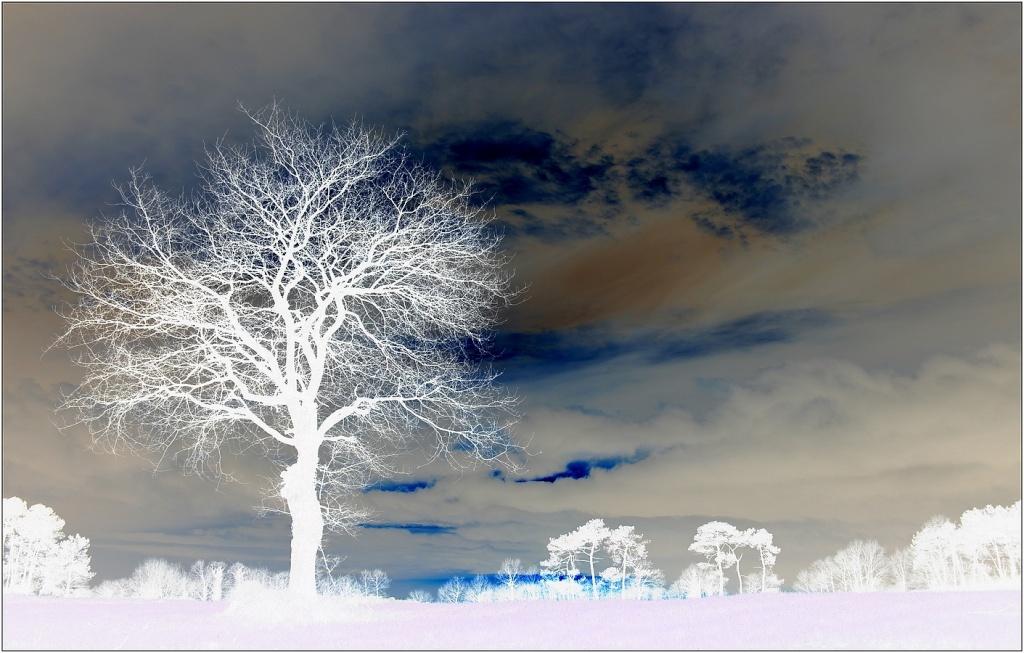 Les arbres...différements. Abreof10