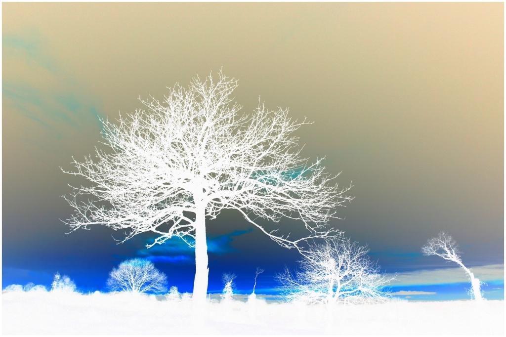 Les arbres...différements. Arbre_10
