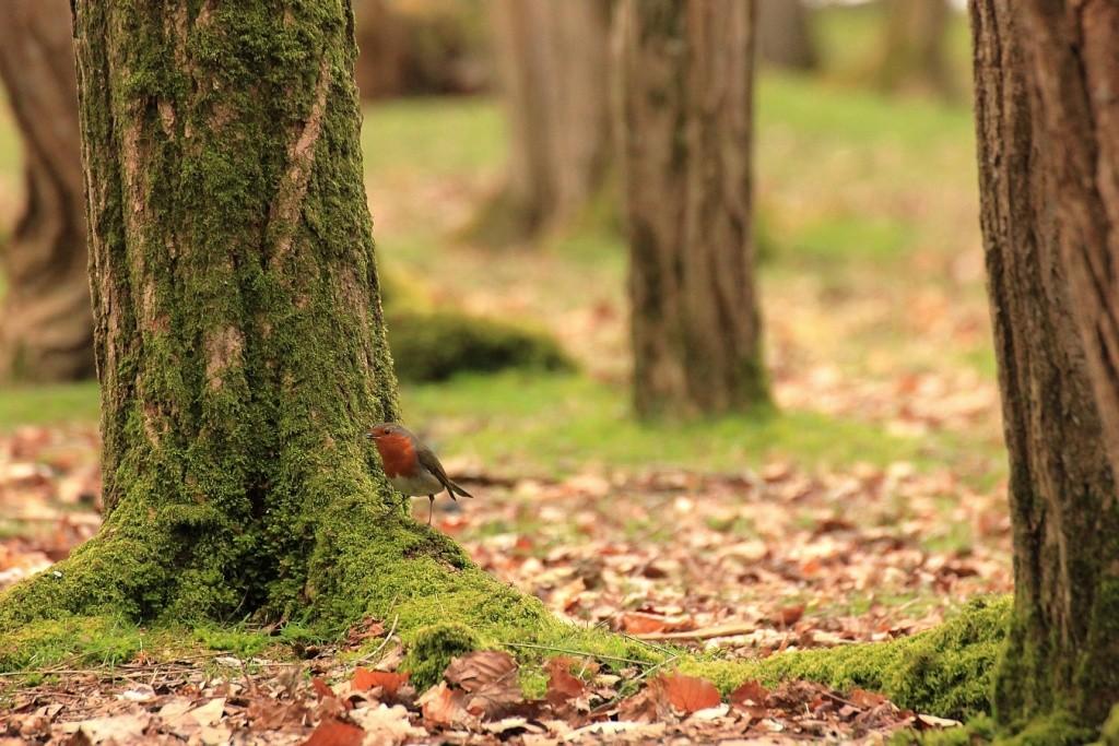 Dans la forêt Rouge_10
