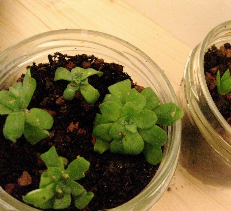 La multiplication des plantes Img_0813