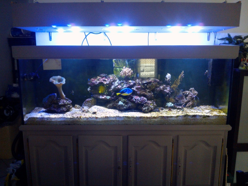 projet aquarium 700 litres jaubert - Page 4 Wp_00028