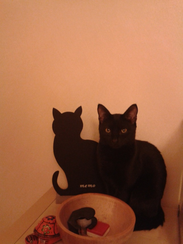 Chats noirs - Page 2 2012-114