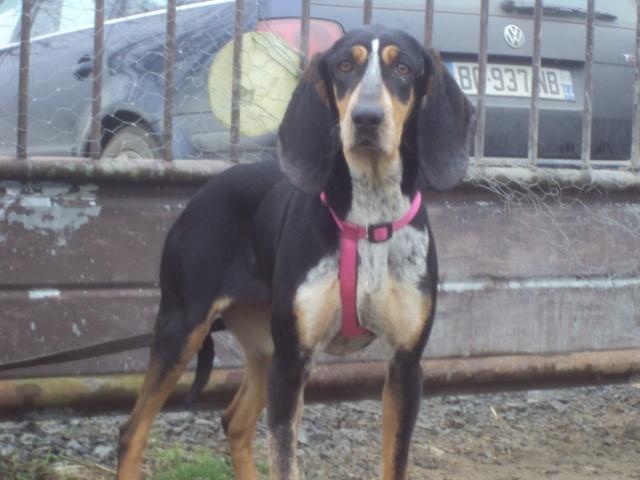 GRETEL , en fugue, adoption suspendue  Dsc03011