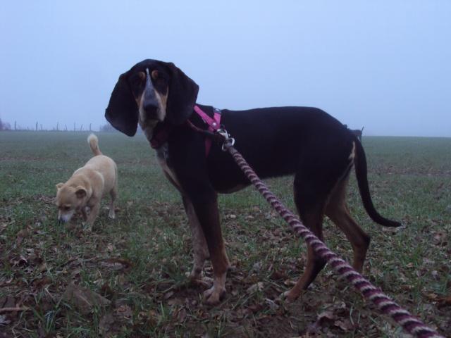 GRETEL , en fugue, adoption suspendue  Dsc03113