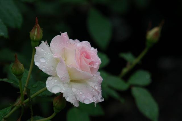 Offrons-nous une fleur ... Dsc_0010