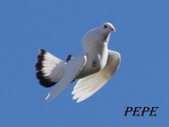 fotos andresito de algeciras - Página 28 _2131310