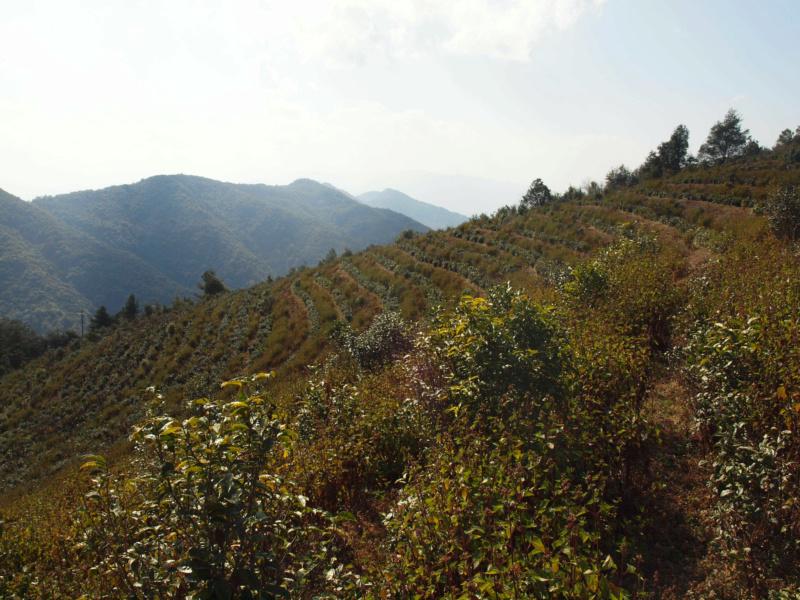 Sortie de la moria Yunnan25