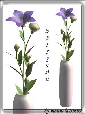 Цветы для дома Image787