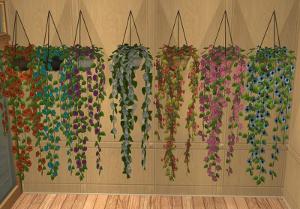 Цветы для дома - Страница 7 Image797